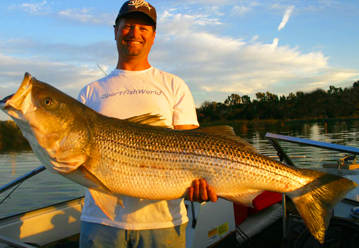 Wombat charters striped bass fishing guides napa river for Napa river fishing