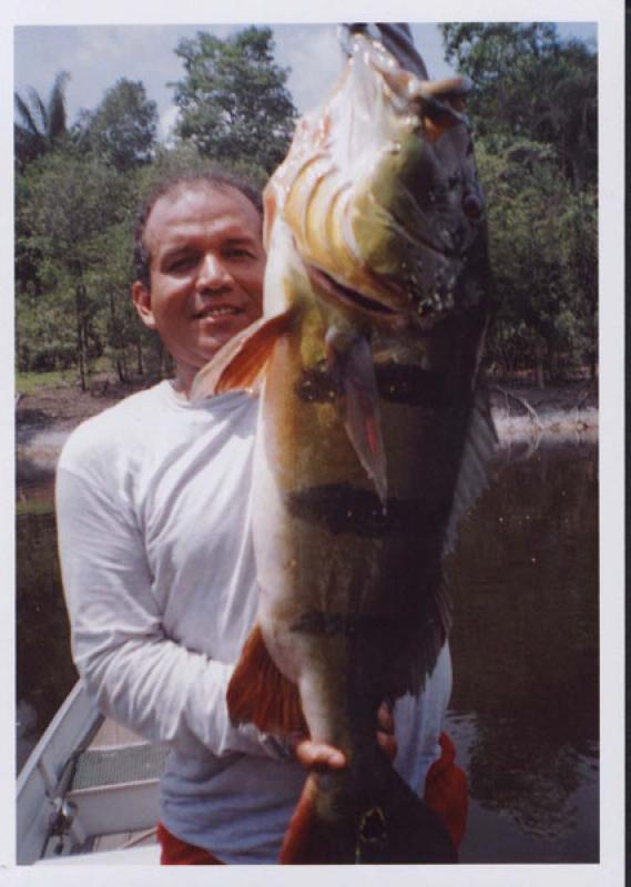 WORLDWIDE SPORTFISHING PHOTOS, Brazil,  Peacock Bass, Peacock Bass caught in the Black River, Amazon Guide Raimundo Neves Gonçalves Neves Rua Nelson Batista Sales, 290 - ALEIXO MANAUS-AMAZONAS-BRASIL CEP-69083-120 rngonca@hotmail.com