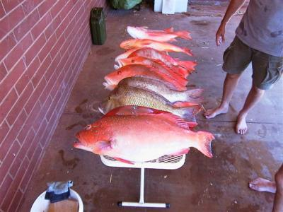 Dampier Offshore Fishing for Red Emperor