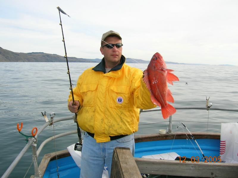 Rockfish - Rockfish caught at Bodega Bay - photos submitted by Rich Pharo -SportfishWorld © Copyright 2003 All rights reserved