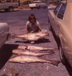 Australia|Western Australia|Perth Metropolitan Area|Mandurah|These Mulloway were caught in 1973 during an Offshore Angling Club 'Field Day' at Mandurah in Western Australia by Bob Fisher...Copyright SportfishWorld © Bob Fisher