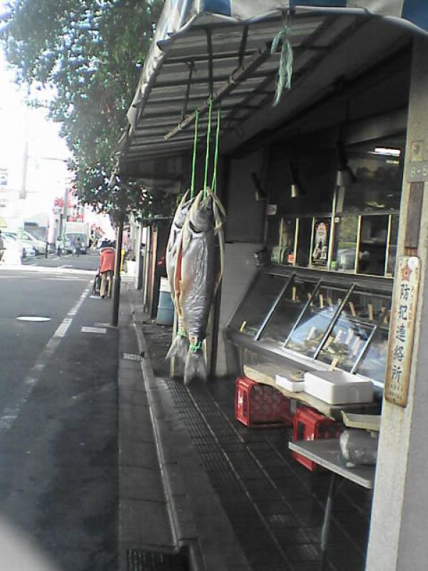 WORLDWIDE SPORTFISHING PHOTOS, Japan,   Photo, My sister, Cathy Umehara sent me this photo of fish being hung out to dry in Tokyo, Japan...