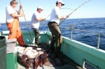 GIANT HUMBOLDT SQUID Fishing Photos! Fishing in USA for GIANT HUMBOLDT SQUID &COPY SportfishWorld