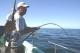 SPORTFISHWORLD FISHING PHOTO   USA   FISH SPECIES Giant Humboldt Squid    Giant Humboldt Squid Trip Bodega Bay 2006 - Bob Fisher.   SportfishWorld © 2003 Bob Fisher