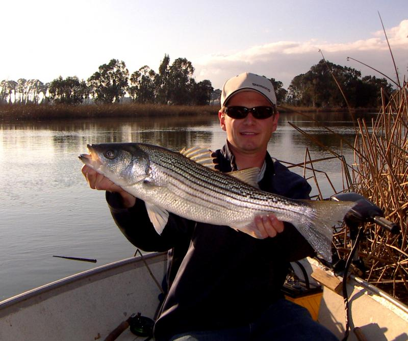 Striped Bass - Caught in the Napa River on a fly rod with a