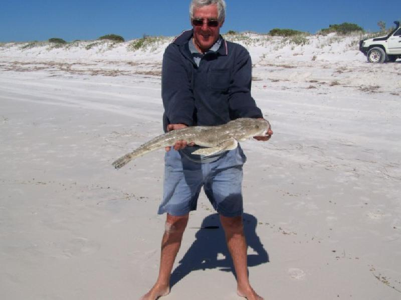 WORLDWIDE SPORTFISHING PHOTOS, Australia,   Flathead,  old cobb caught this big girl east of town last weekend