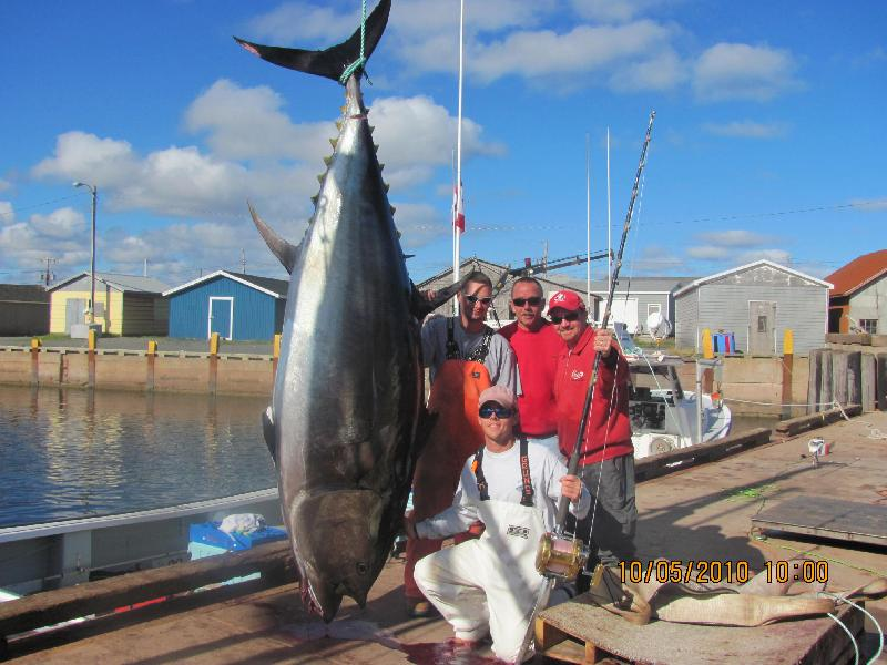 Tuna, Bluefin - A 912lb Bluefin Tuna landed with Bruce Bros. Charters.