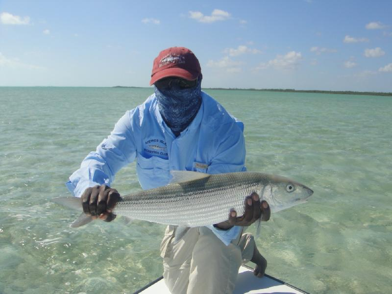 WORLDWIDE SPORTFISHING PHOTOS, Bahamas,   Bonefish, A nice sized Andros Bonefish. Caught with Captian Nick Leadon at the Andros Island Bonefish Club. Cargill Creek, Andros Bahamas